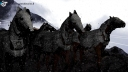 bajadiso-warhorses